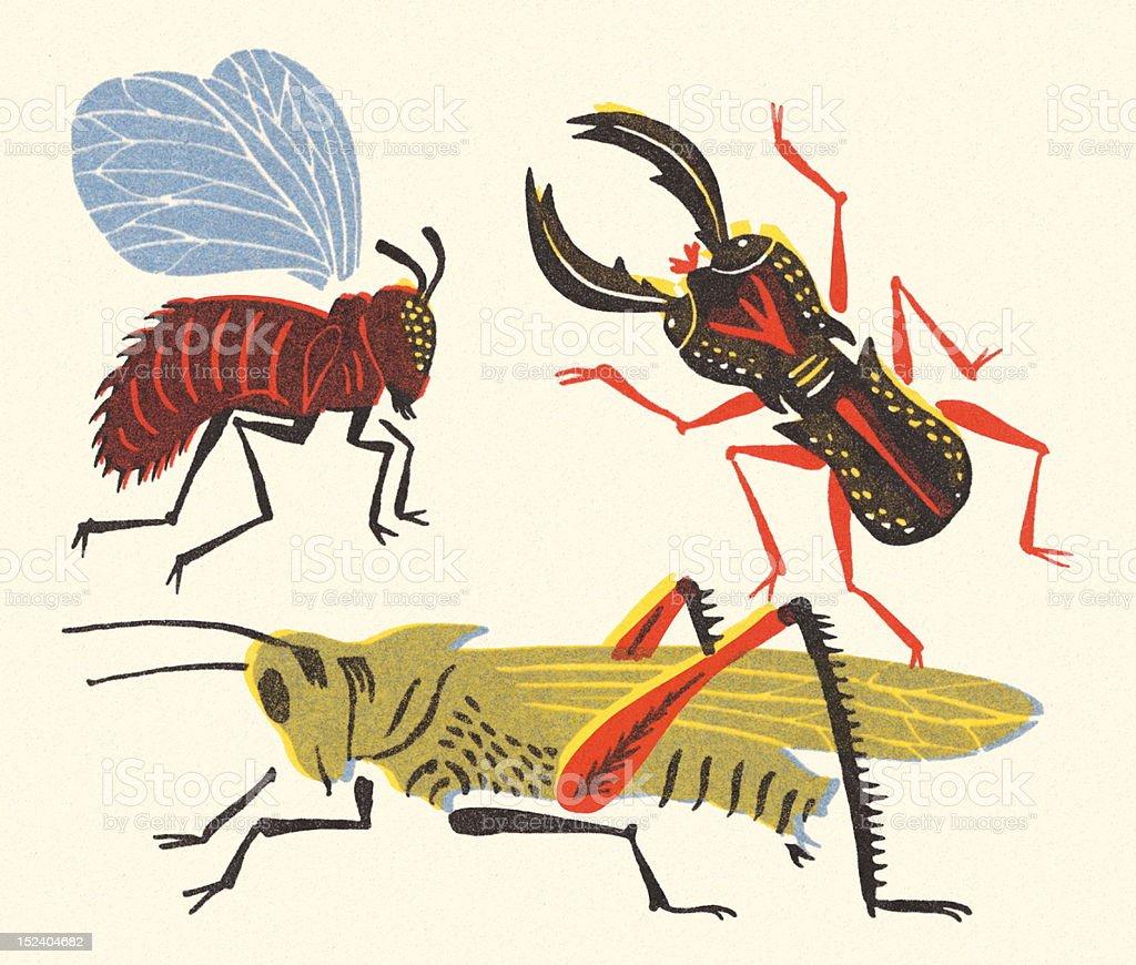 Variety of Bugs vector art illustration