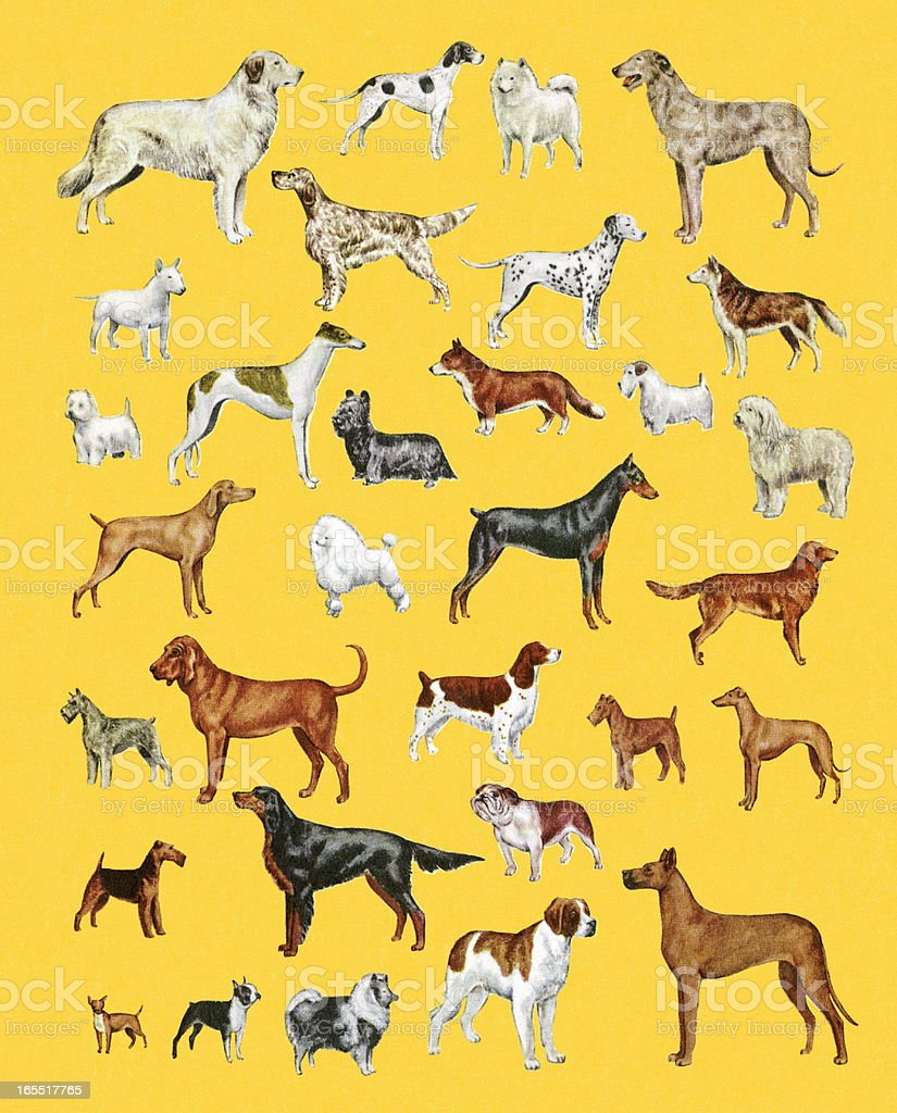 Variety of Dogs royalty-free stock vector art