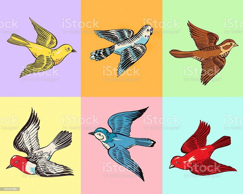 Various Birds in Squares vector art illustration