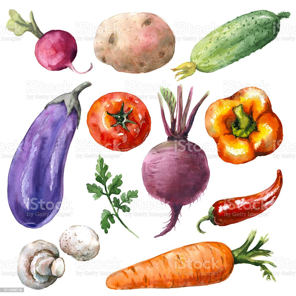 Various Vegetables Set vector art illustration