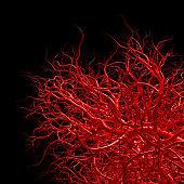 vascular system - blood vessels on black