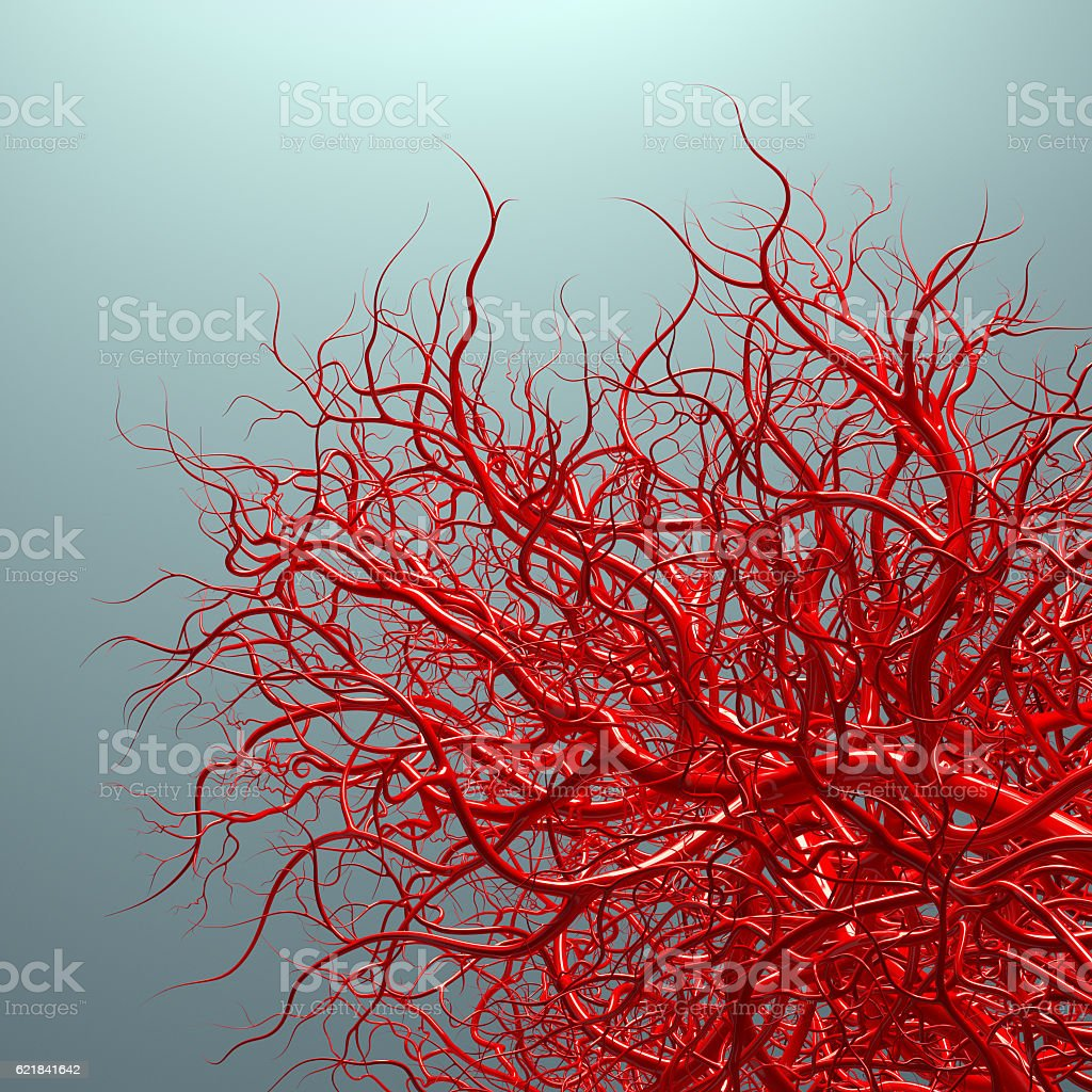 vascular system - blood vessels on blue stock photo