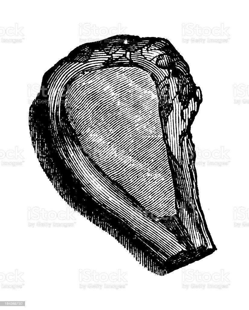 Veal cutlet | Antique Culinary Illustrations vector art illustration