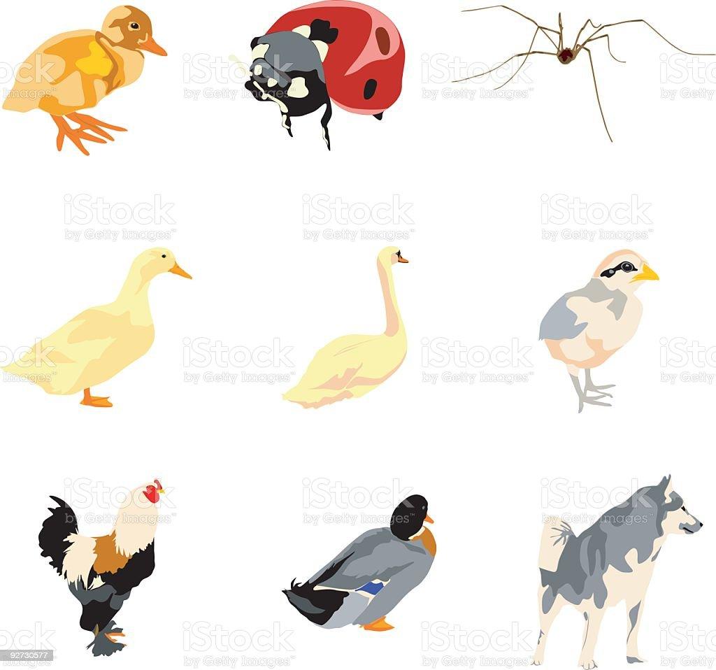 Vector animals vector art illustration