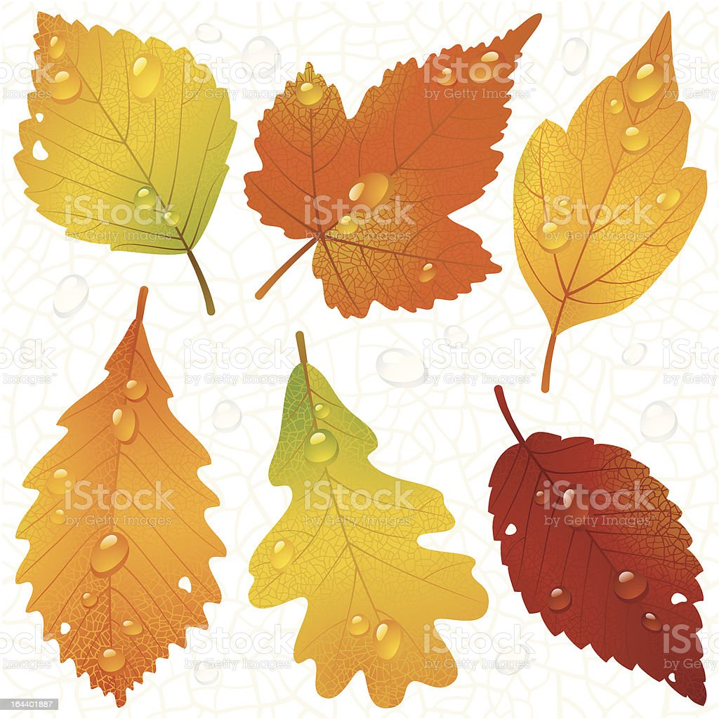 Vector autumn leaves and seamless vein background royalty-free stock vector art