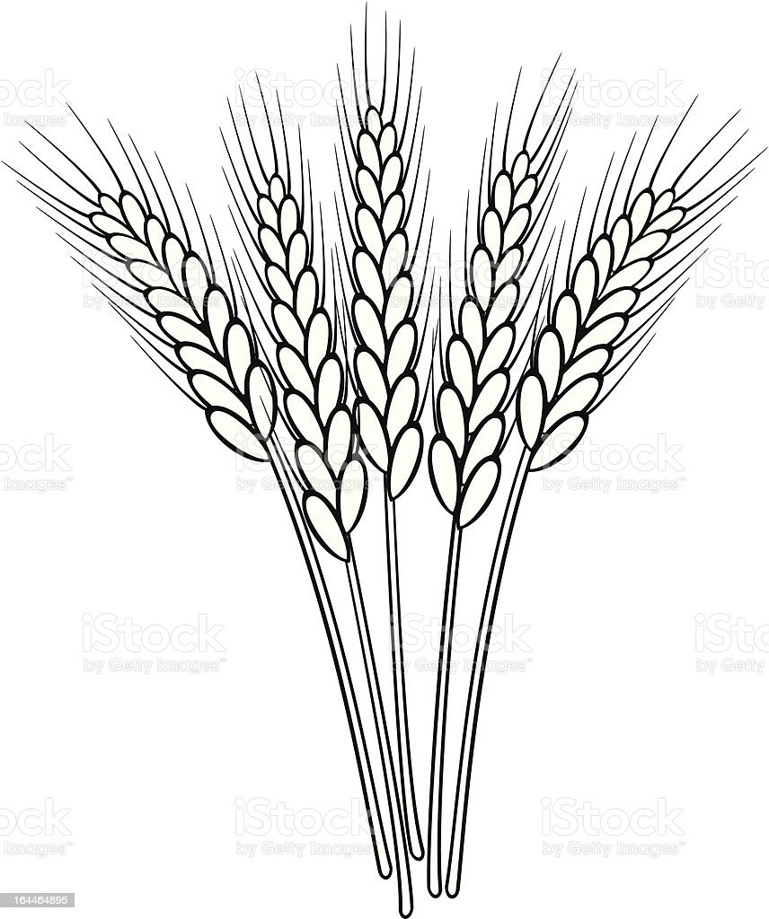 vector black and white wheat ears royalty-free stock vector art