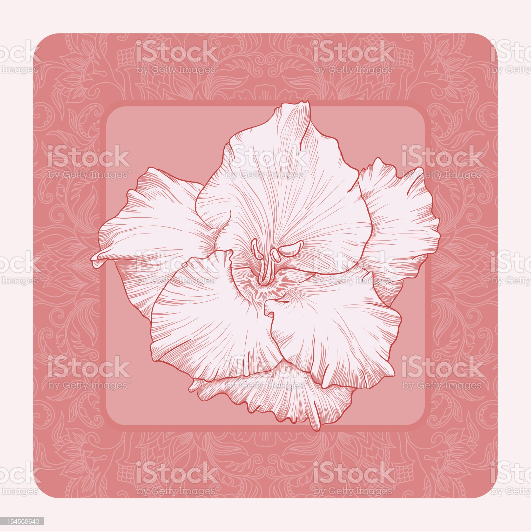 Vector illustration for greeting card with gladiolus. royalty-free stock vector art