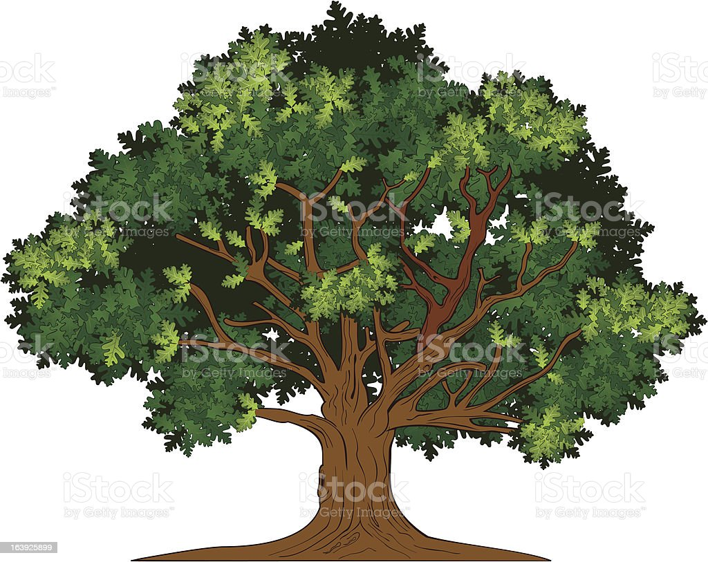 Vector oak tree vector art illustration