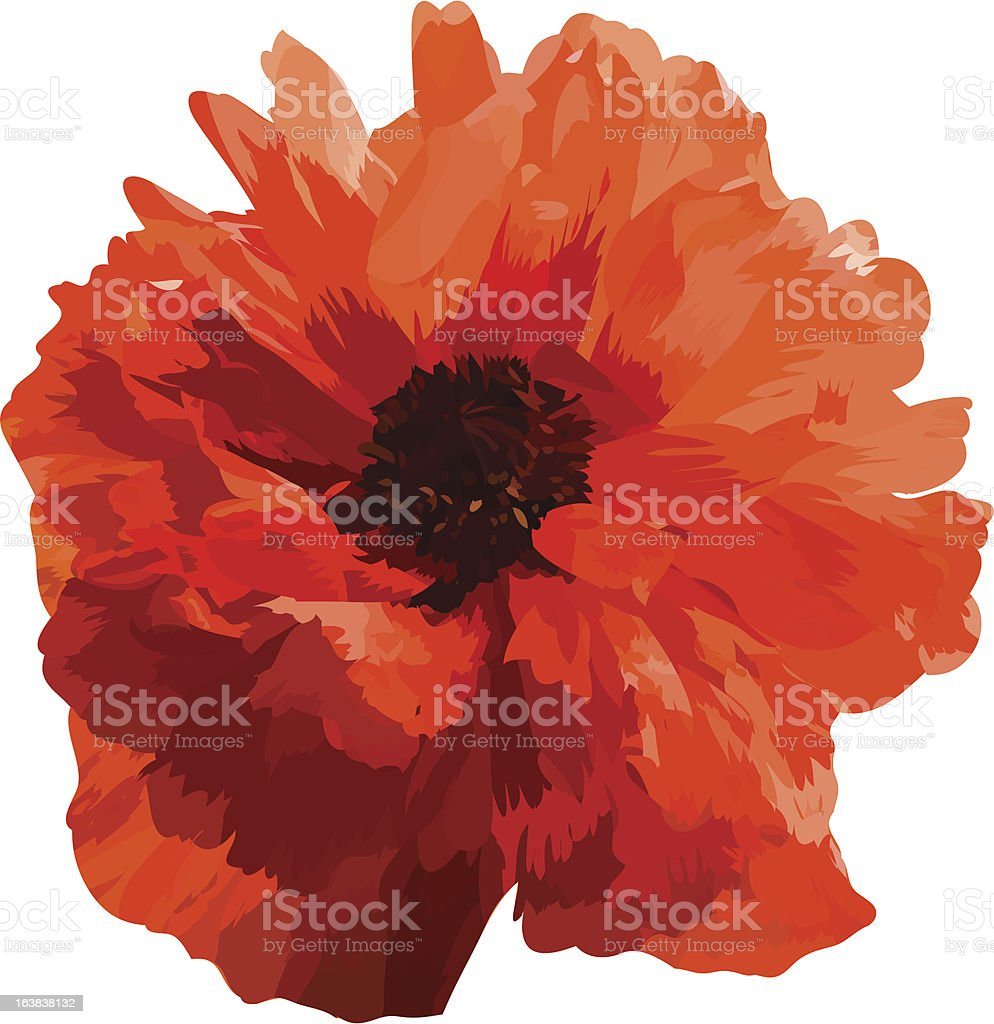 Vector red poppy. royalty-free stock vector art