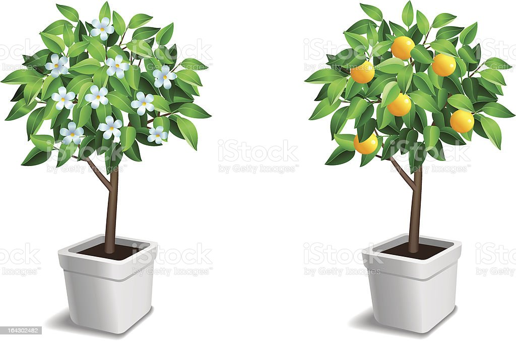 vector set of two little tree vector art illustration
