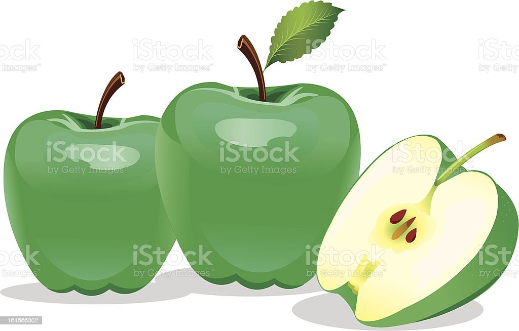 Vector Shiny Green Apple with stork vector art illustration