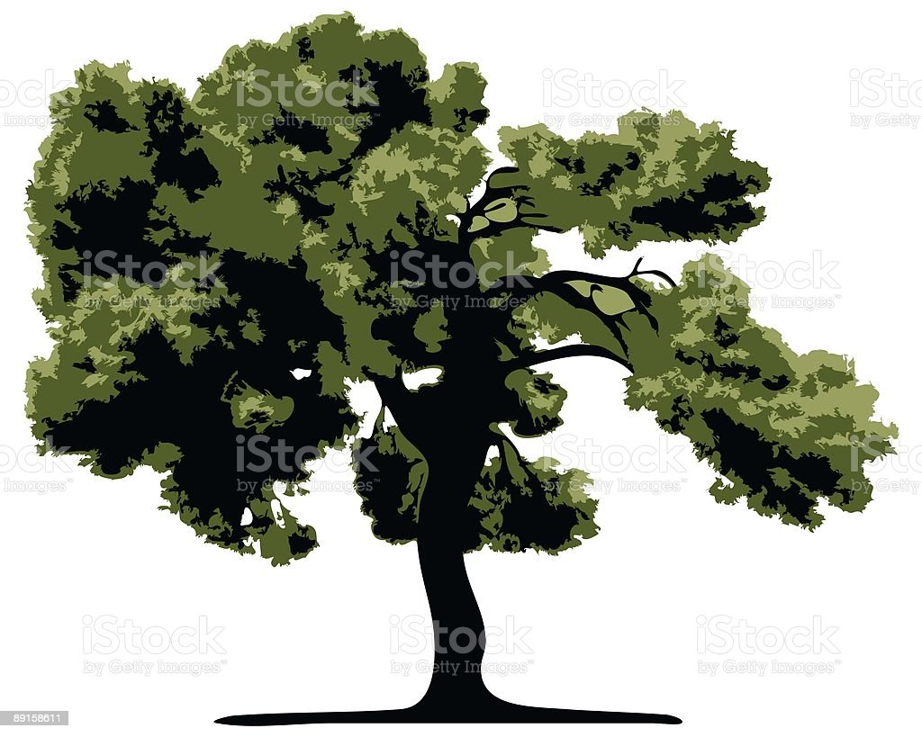 Vector Tree Isolated royalty-free stock vector art