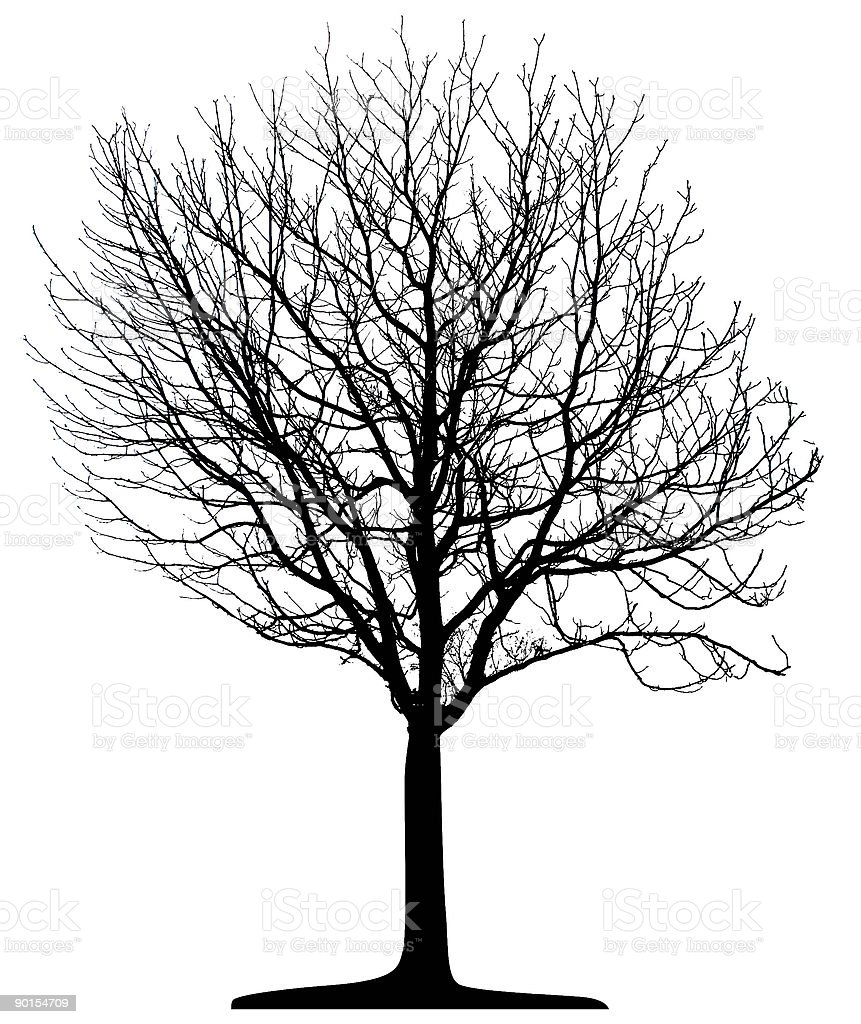 Vector Tree Isolated vector art illustration