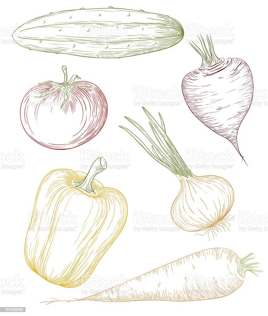 Vector vegetables. royalty-free stock vector art