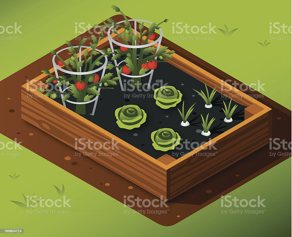 Vegetable Garden With Tomatoes, Lettuce and Garlic vector art illustration