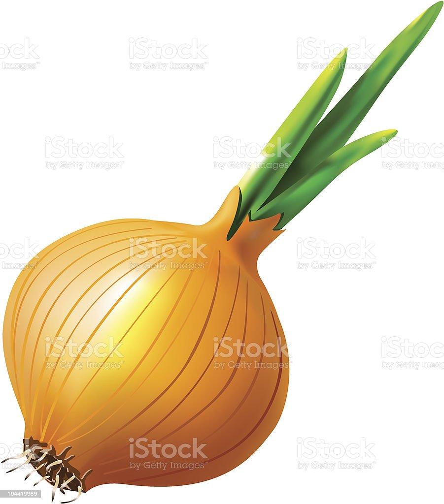 Vegetable onion in salad vector art illustration