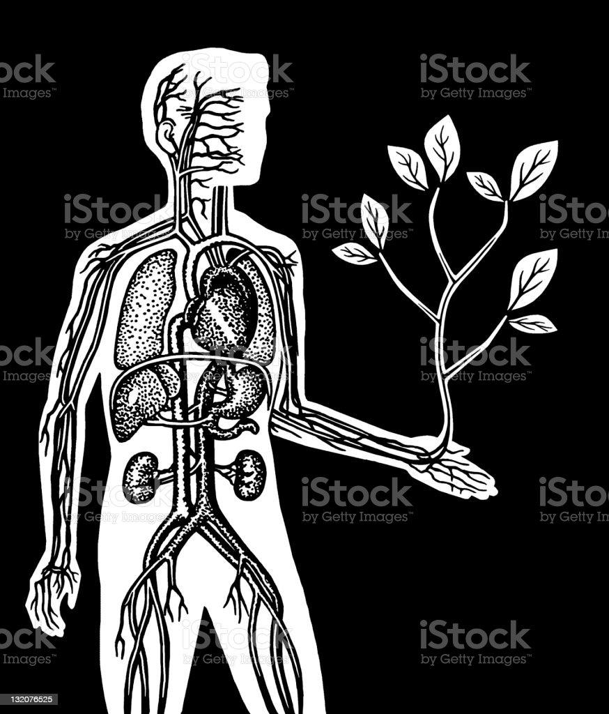 Vein Man Holding Tree royalty-free stock vector art