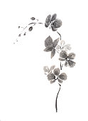 Vertical orchid branch Japanese style original sumi-e ink painting.