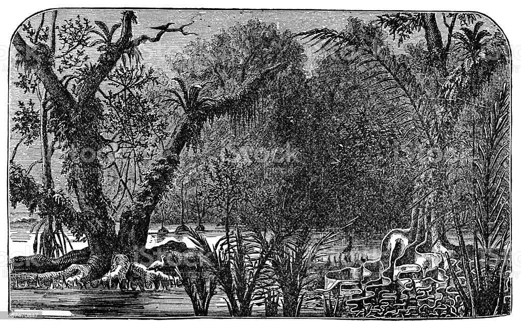Victorian engraving of the Amazonian rain forest vector art illustration