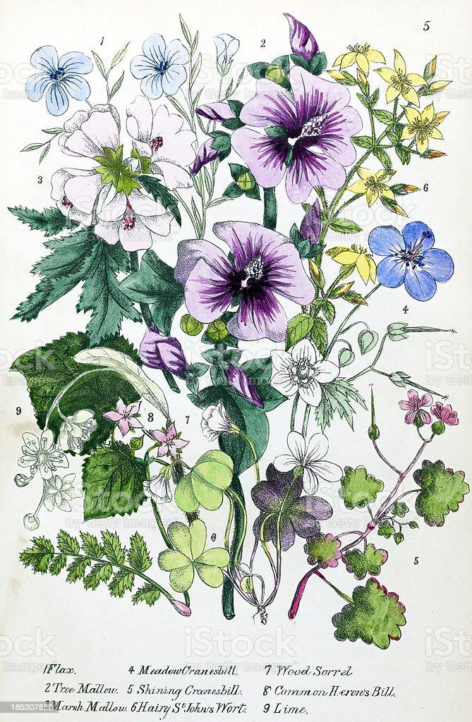 Victorian Flower Illustration vector art illustration