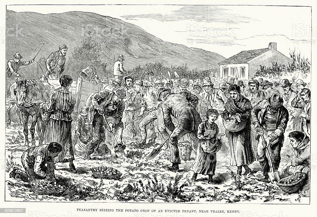 Victorian Ireland Land War - Seizing the Potato Crop vector art illustration