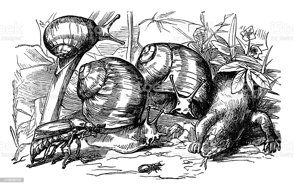 Victorian snails, insects and a lizard vector art illustration