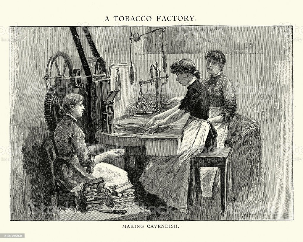 Victorian tobacco factory women making cavendish vector art illustration