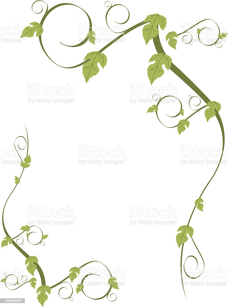 vine vector art illustration