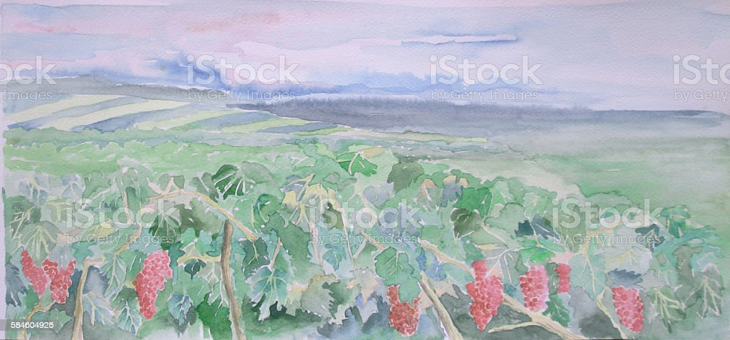 Vineyard watercolor vector art illustration