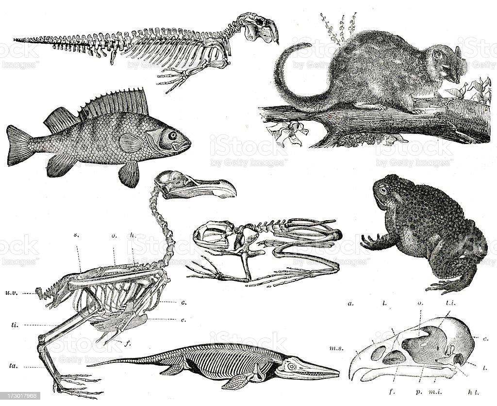 Vintage Animals Collection vector art illustration