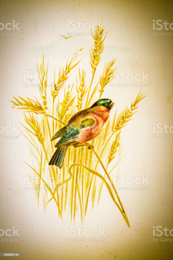Vintage Bird vector art illustration