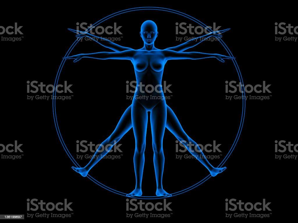 Vitruvian woman vector art illustration