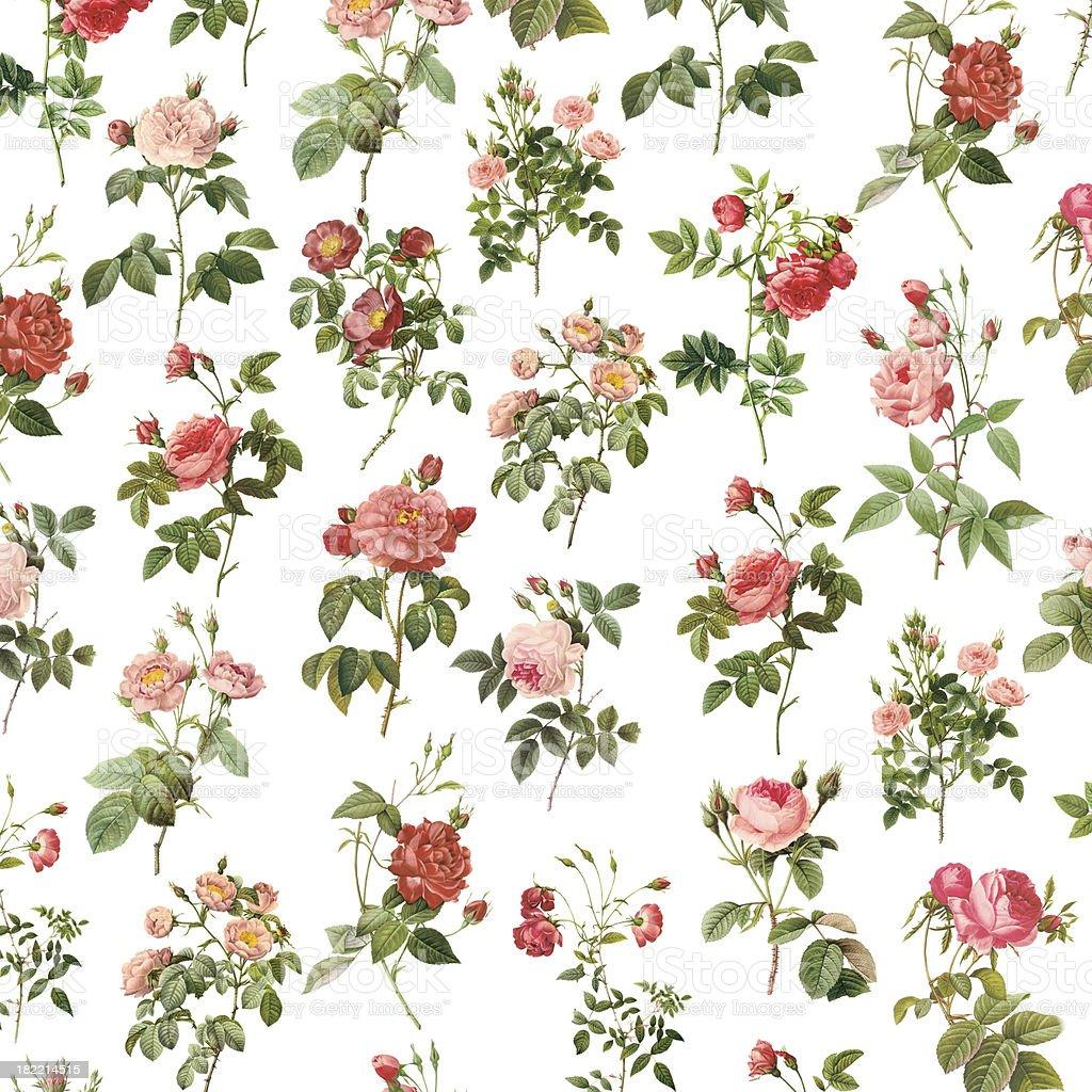 Wallpaper with Roses   Antique Flower Illustrations vector art illustration