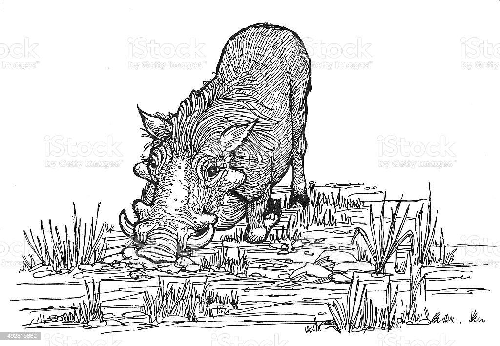 Wart Hog 2 Lizenzfreies vektor illustration