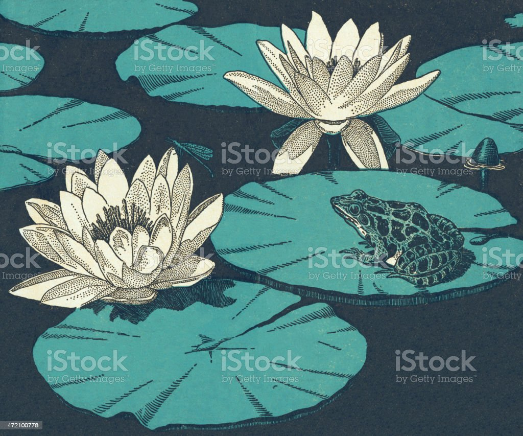 Water Lillies and Toad vector art illustration