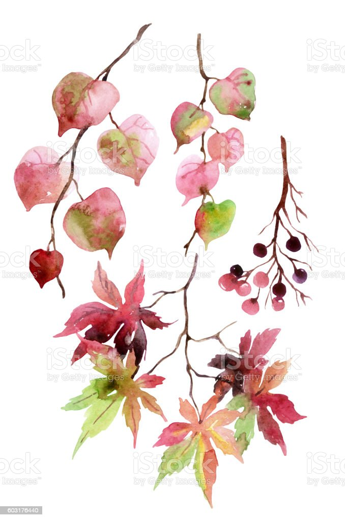 Watercolor autumn leaves, branches and berry. vector art illustration