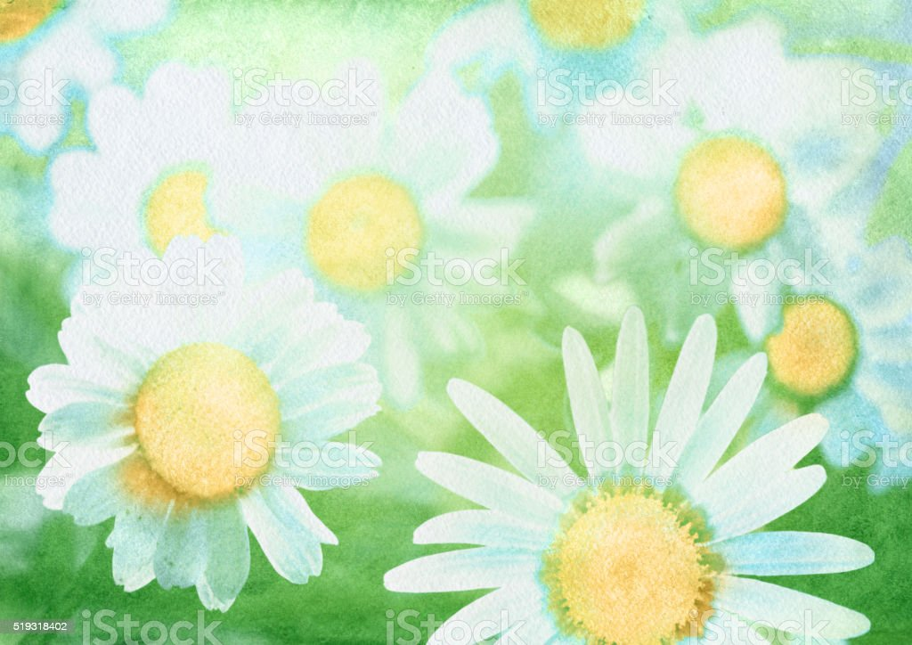 watercolor background with daisies vector art illustration