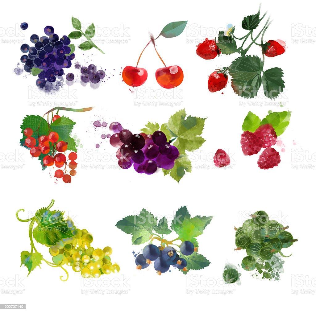 watercolor berries set vector art illustration
