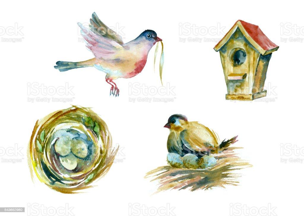 Watercolor birds and eggs. vector art illustration