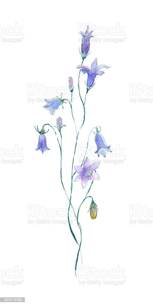 Watercolor blue flower. vector art illustration