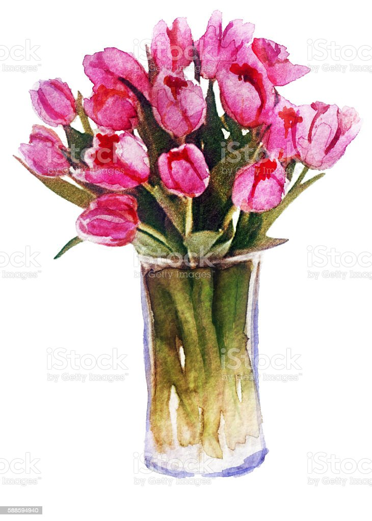 watercolor bouquet of tulips on white background vector art illustration