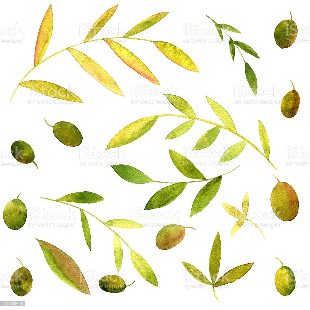 watercolor branches of olives with leaves vector art illustration
