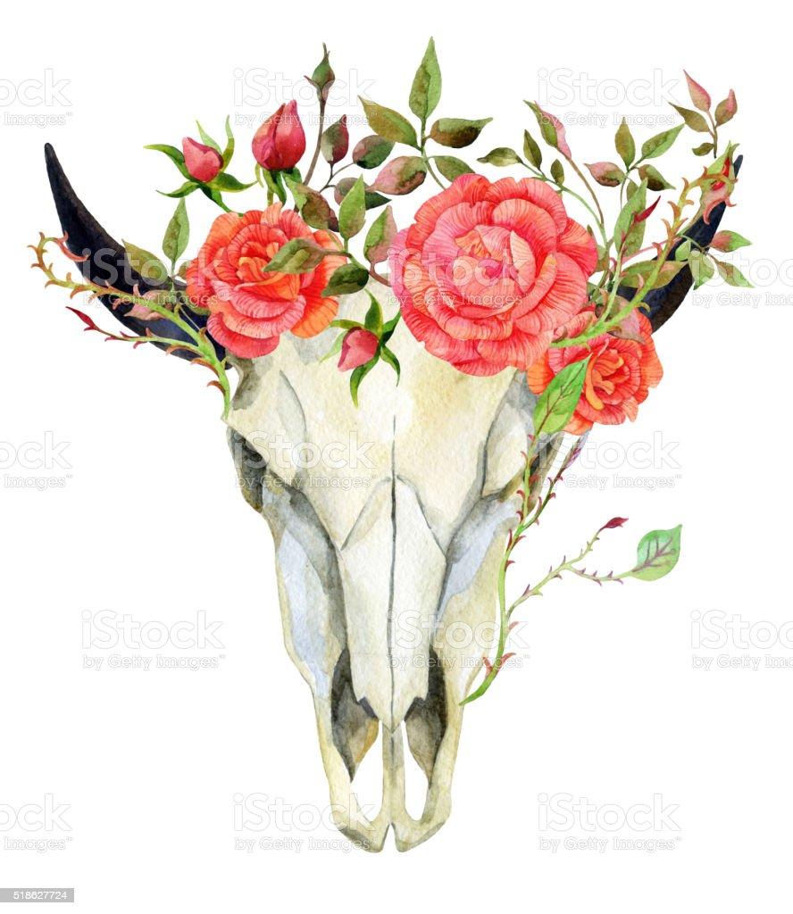 watercolor buffalo skull vector art illustration