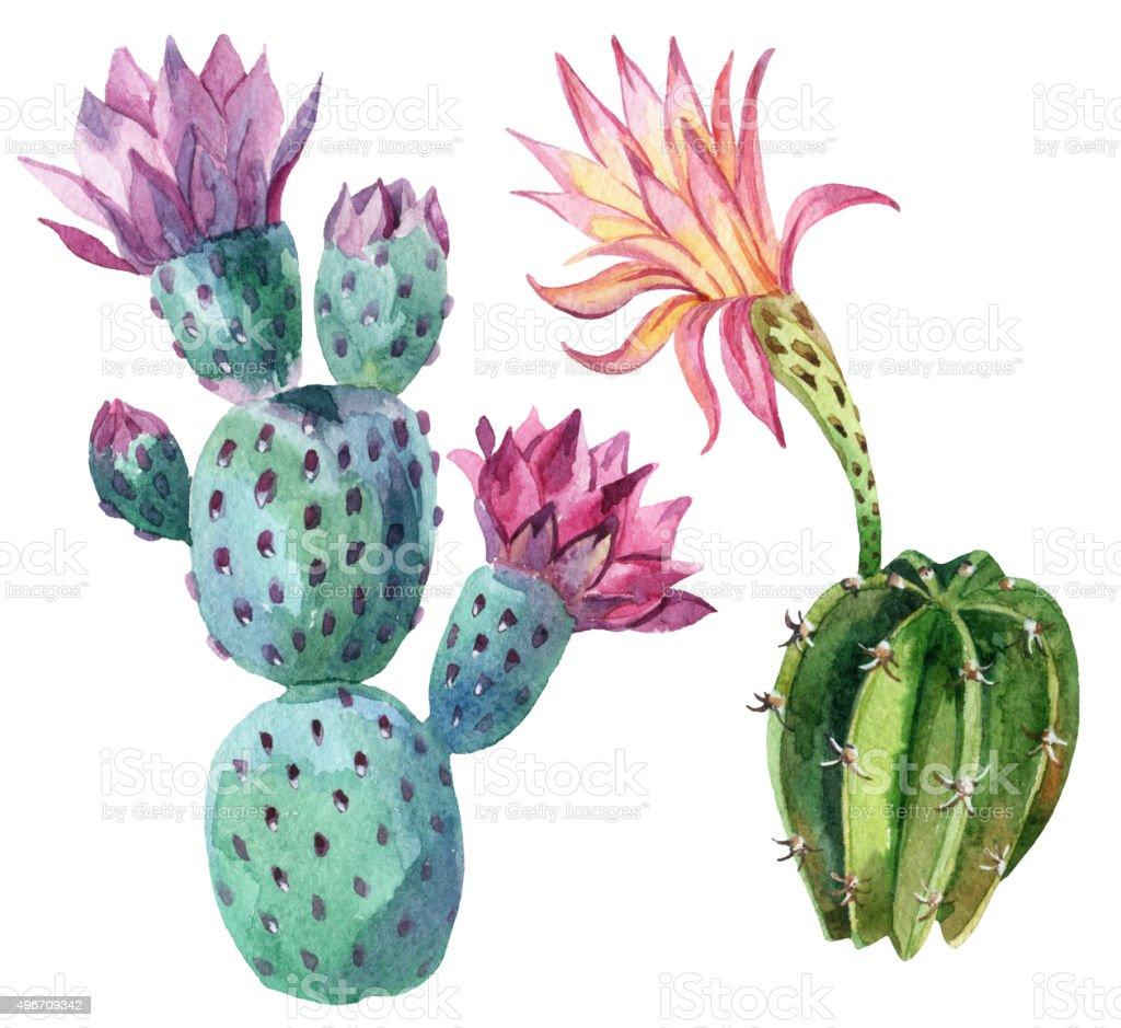 Watercolor cactus vector art illustration