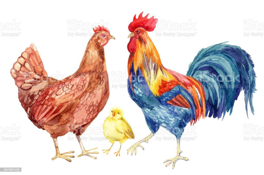 Watercolor chicken family - hen, rooster, chicken. vector art illustration