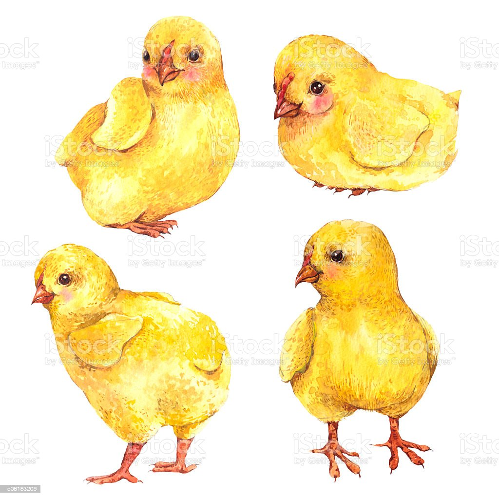 Watercolor chicks isolated on a white background vector art illustration