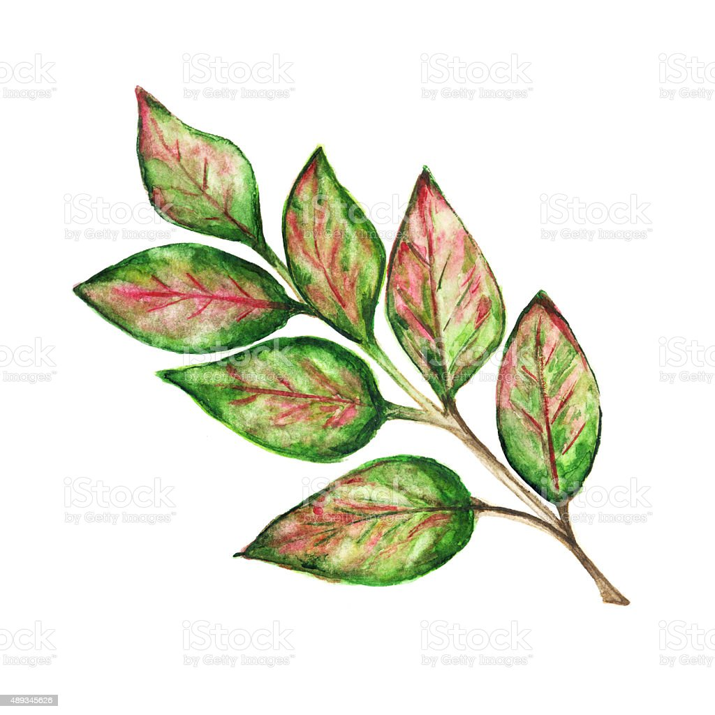 Watercolor colorful branch with leaves vector art illustration