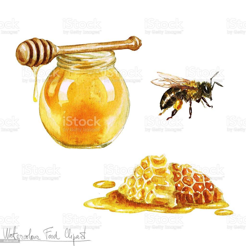 Watercolor Cooking Clipart - Honey vector art illustration