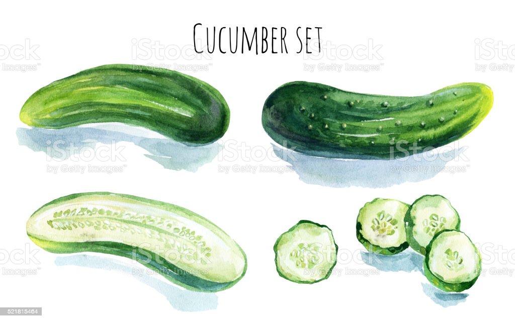Watercolor cucumber set vector art illustration
