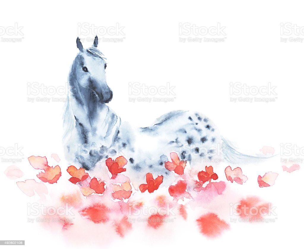 Watercolor dapple grey horse and red poppies flowers vector art illustration